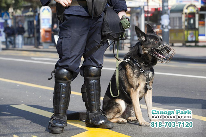 K9 Heroes in California: Super Dogs